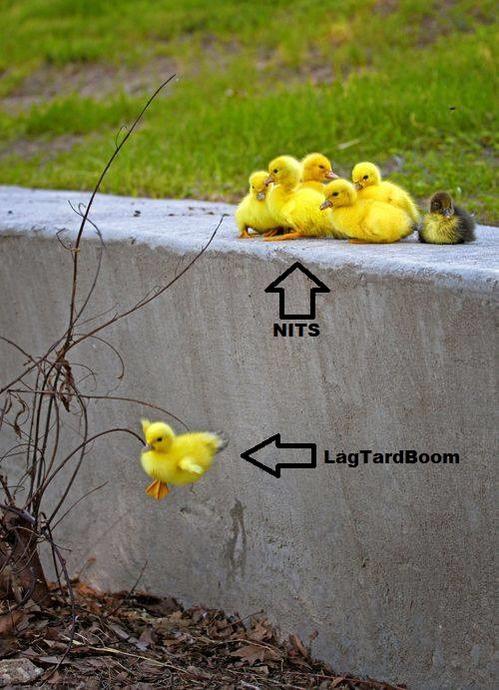 Nits.jpg