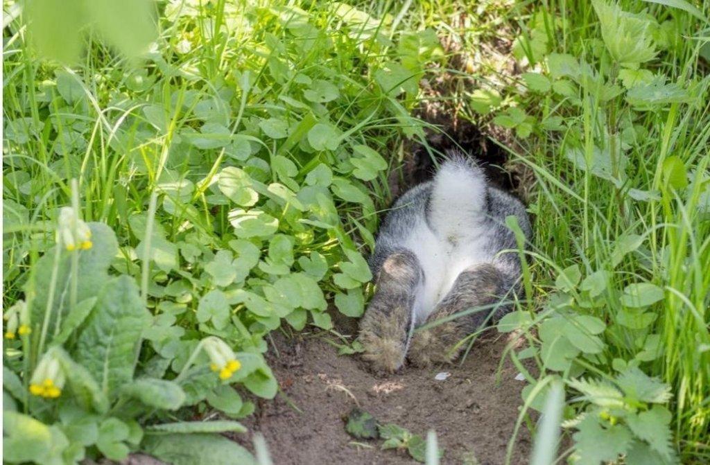 rabbit-hole.jpg