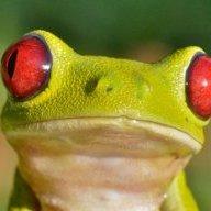 livingfrog